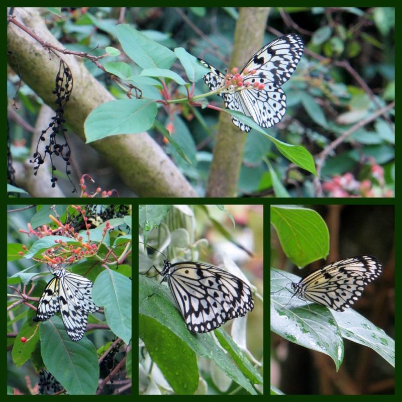 Cockrell Butterfly Center-- Houston TX